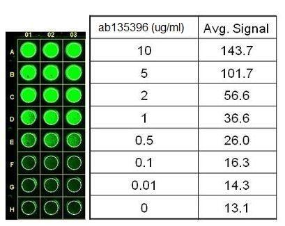 In-Cell ELISA - Anti-Lactate Dehydrogenase antibody [98A-1F9BB1] (ab135396)