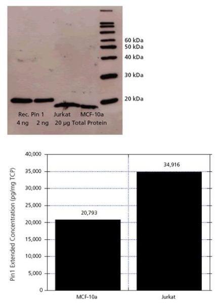 Cell Type Comparison