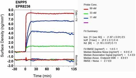 Other - Anti-ENPP5 antibody [EPR8236] (ab137014)