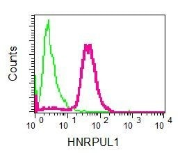 Flow Cytometry - Anti-E1B-AP5 antibody [EPR2632(2)] (ab137016)