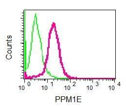 Flow Cytometry - Anti-PPM1E antibody [EPR8722] (ab137023)