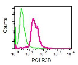 Flow Cytometry - Anti-POLR3B antibody [EPR8719] (ab137030)