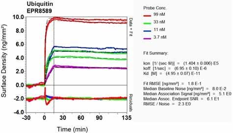 OI-RD Scanning - Anti-Ubiquitin antibody [EPR8589] (ab137031)