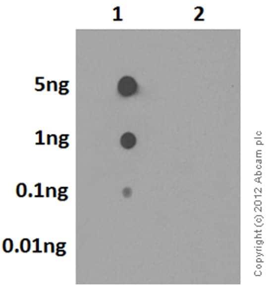 Dot Blot - Anti-SOD2/MnSOD (acetyl K68) antibody [EPVANR2] (ab137037)