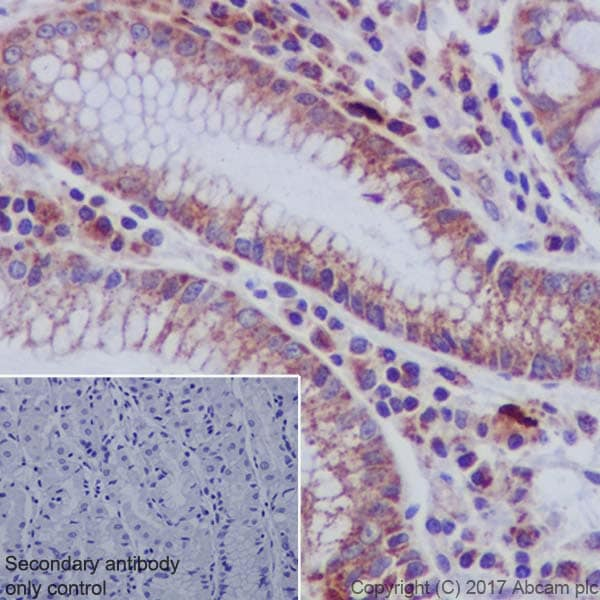 Immunohistochemistry (Formalin/PFA-fixed paraffin-embedded sections) - Anti-Ndufs4 antibody [EP7832] (ab137064)