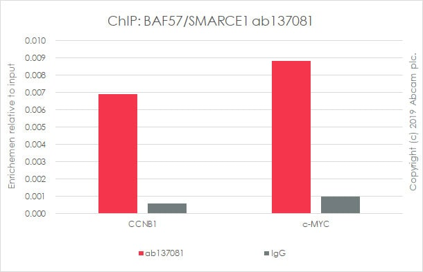ChIP - Anti-BAF57/SMARCE1 antibody [EPR8849] - ChIP Grade (ab137081)
