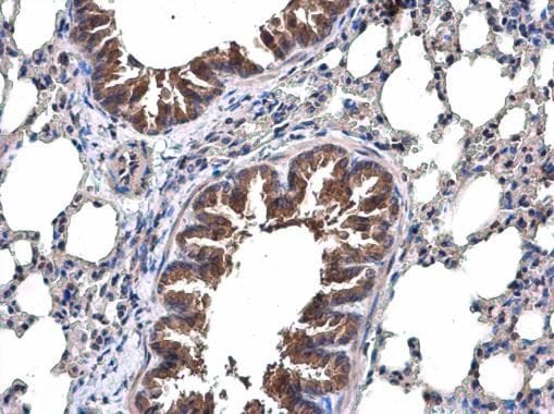 Immunohistochemistry (Formalin/PFA-fixed paraffin-embedded sections) - Anti-TRAF6 antibody (ab137452)