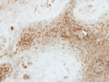Immunohistochemistry (Formalin/PFA-fixed paraffin-embedded sections) - Anti-SEC23 antibody (ab137583)
