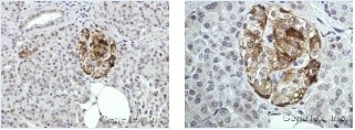 Immunohistochemistry (Formalin/PFA-fixed paraffin-embedded sections) - Anti-Annexin-2/ANXA2 antibody (ab137645)
