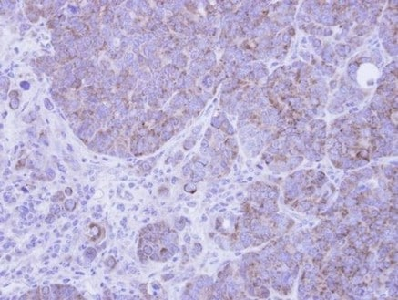 Immunohistochemistry (Formalin/PFA-fixed paraffin-embedded sections) - Anti-AIF antibody (ab137725)