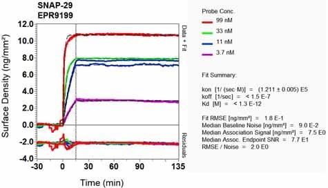 OI-RD Scanning - Anti-SNAP29 antibody [EPR9199] (ab138500)