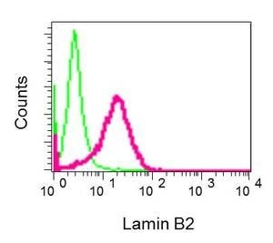 Flow Cytometry - Anti-Lamin B2 antibody [EPR9700(B)] (ab138516)