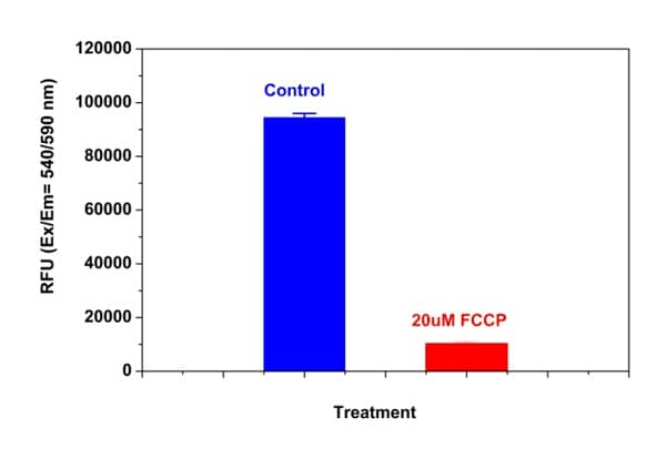 Demonstation of decrease in MitoOrange Dye fluorescence with the addition of FCCP in HeLa cells