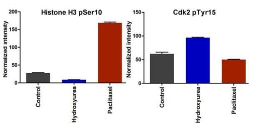 Sample experiment using ab139412 on HeLa cells treated with paclitaxel and hydroxyurea.