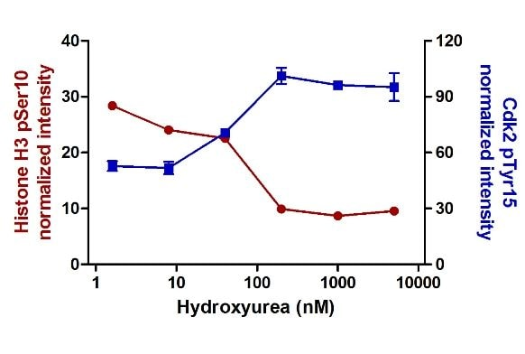 Sample data using ab139412 on HeLa cells treated with a titration of hydroxyurea.