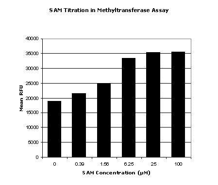 S-adenosylmethionine Titration in Methyltransferase Assay
