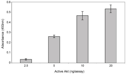 Analysis of purified active Akt activity with ab139436.