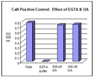 Calcineurin positive control