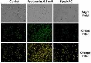 Fluorescence Microscopy Profiling