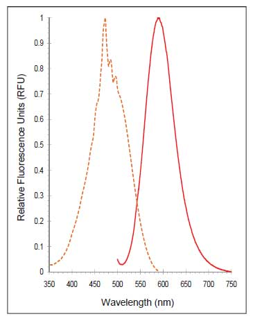 Absorption and fluorescence emission spectra for P4HB (PDIA1) Detection Reagent.