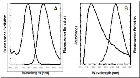 Absorbance and emission spectra for CytoPainter ER Staining kit
