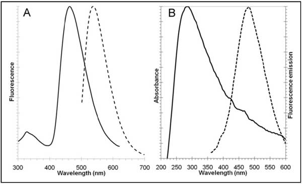 Excitation and fluorescence emission spectra for Aggresome Detection Reagent and Hoechst 33342