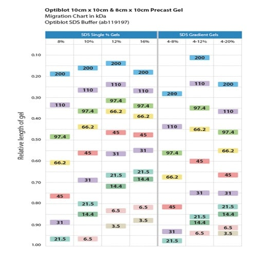 SDS-PAGE - TEO-Tricine Precast Gels - RunBlue™ (10%, 17-well, 10x10cm) (ab139598)