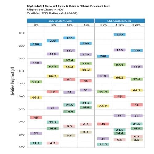 SDS-PAGE - TEO-Tricine Precast Gels - RunBlue™ (4-20%, 17-well, 8x10cm) (ab139610)