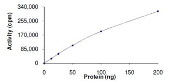 Functional Studies - Recombinant human BRSK2 protein (ab139629)
