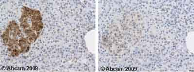 Immunohistochemistry (Formalin/PFA-fixed paraffin-embedded sections) - Anti-C Peptide antibody (ab14181)