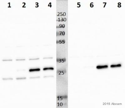 Western blot - Anti-NDUFS3 antibody [17D95] (ab14711)