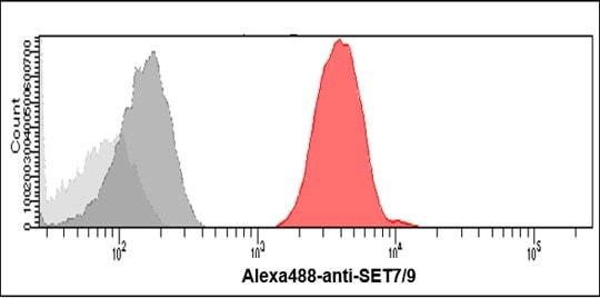 Flow Cytometry - Anti-SET7 antibody [s4E5] (ab14820)