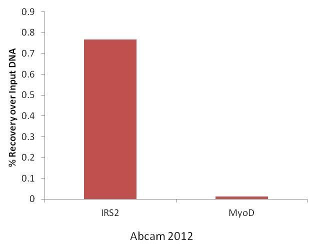 ChIP - Anti-KAT3B / p300 antibody [3G230 / NM-11] - ChIP Grade (ab14984)
