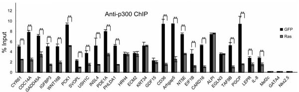 ChIP - Anti-KAT3B / p300 antibody [3G230 / NM-11] - ChIP Grade (ab14984)