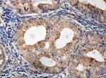 Immunohistochemistry (Formalin/PFA-fixed paraffin-embedded sections) - Anti-PNKD antibody (ab140115)