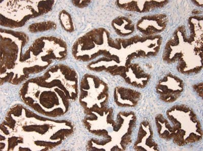 Immunohistochemistry (Formalin/PFA-fixed paraffin-embedded sections) - Anti-Prostate Specific Antigen antibody [3E6] (ab140337)