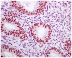 Immunohistochemistry (Formalin/PFA-fixed paraffin-embedded sections) - Anti-Tat-SF1 antibody [EPR9104(B)] (ab140654)
