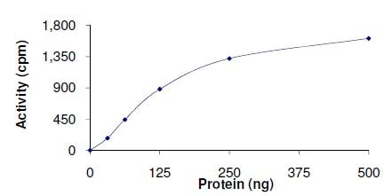 Functional Studies - Recombinant human ROR1 protein (ab140807)