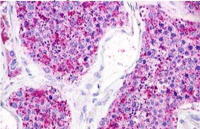 Immunohistochemistry (Formalin/PFA-fixed paraffin-embedded sections) - Anti-LPA-5 antibody (ab140837)