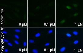 Functional Studies - Deltamethrin, protein phosphatase 2B inhibitor (ab141019)