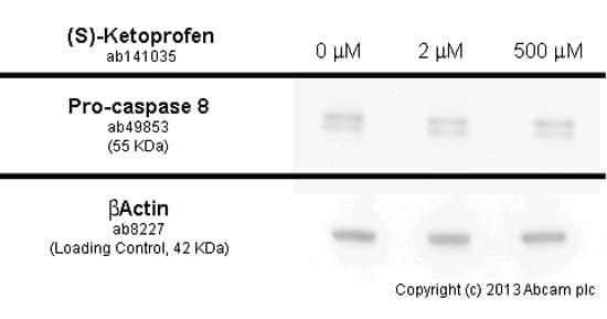 Functional Studies - (S)-Ketoprofen, COX1/2 inhibitor (ab141035)