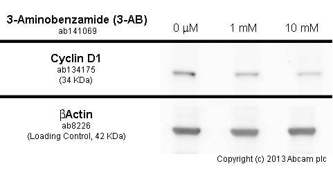 3-Aminobenzamide (3-AB), PARP inhibitor (ab141069)