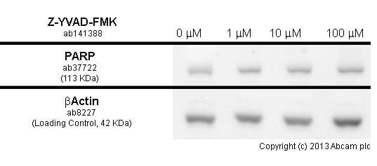 Functional Studies - Z-YVAD-FMK, Irreversible caspase-1 inhibitor (ab141388)