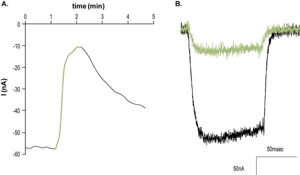 Functional Studies - Amlodipine besylate, L-type calcium channel blocker (ab141777)