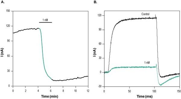 Functional Studies - Dendrotoxin-K, K<sub>V</sub>1.1 blocker (ab141795)