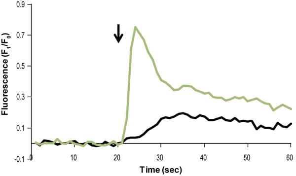 Functional Studies - N-Formyl-Met-Leu-Phe, endogenous chemotactic peptide (ab141806)
