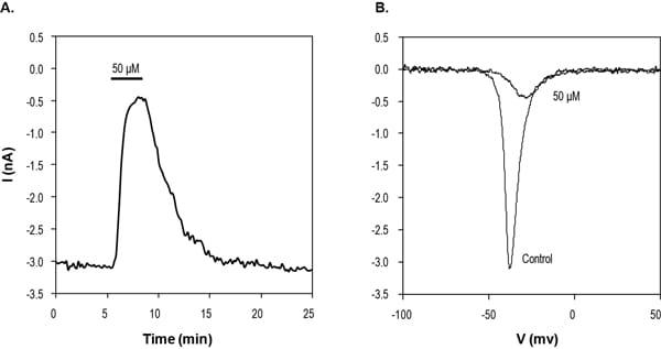 Functional Studies - Lorcainide hydrochloride, Na<sup>+</sup>/K<sup>+</sup> ATPas inhibitor (ab141821)