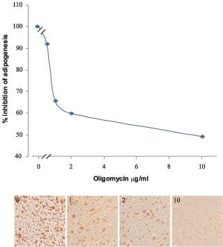 Functional Studies - Oligomycin, ATP synthase inhibitor (ab141829)