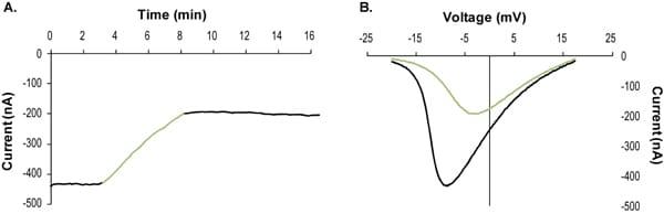 Functional Studies - Guangxitoxin-1E, Specific K<sub>v</sub>2.1 channel blocker (ab141872)