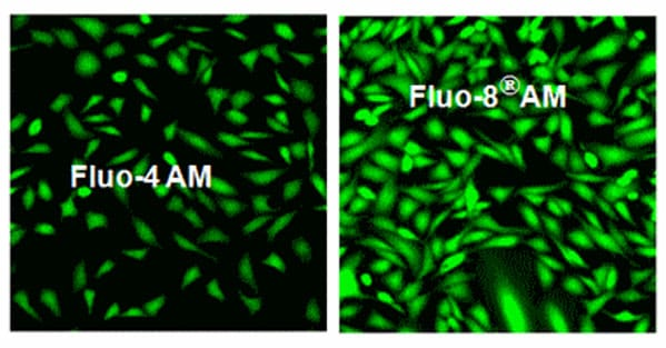 Fluorescent Cell Imaging - Fluo-8 AM, green fluorescent calcium binding dye (ab142773)